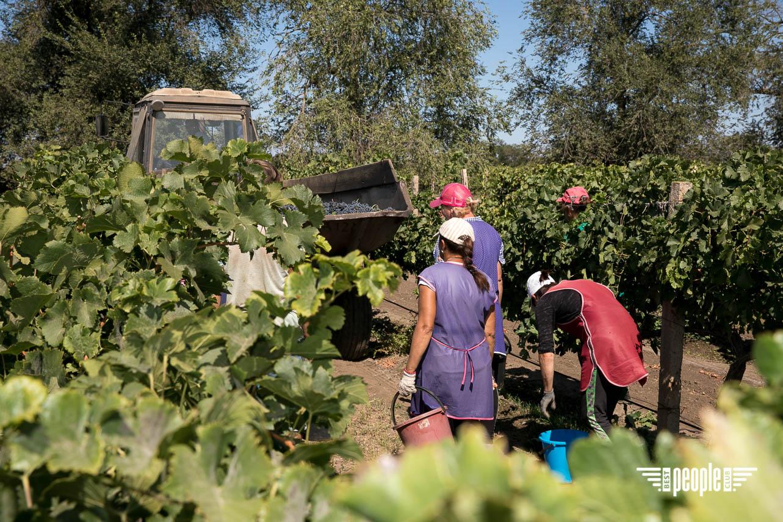 PEOPLE & WINE: Шампань Украины