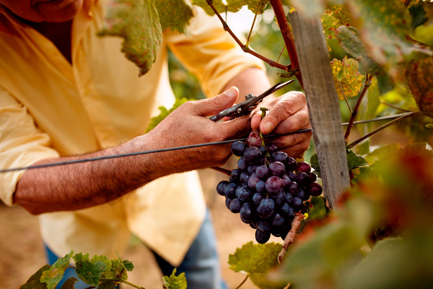 Wines of Portugal Grand Tasting 2021 в Украине